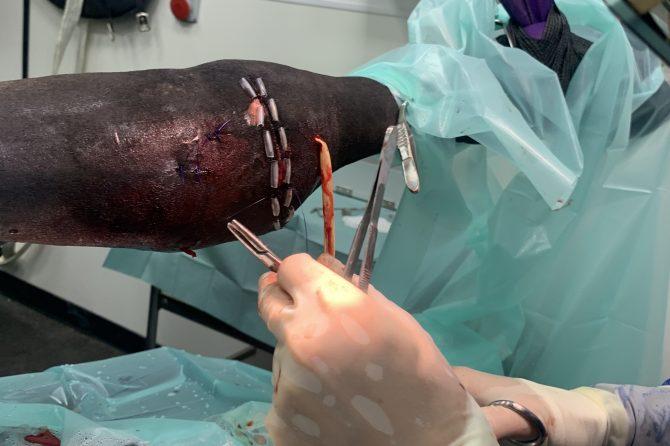Vets On Wheels Equine Orthopaedic Case Study – LEMON